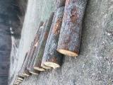 Oak Veneer Logs, FSC 100%
