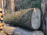 Lasy I Kłody - Kłody Okleinowe, Jesion Czarny , Jesion Amerykański , FSC
