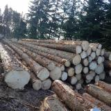 Wood Logs For Sale - Find On Fordaq Best Timber Logs - Spruce Saw Logs, ABC, 25 cm diameter