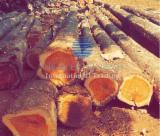 Forest And Logs South America - Brazilian Teak Round Logs - Mato Grosso