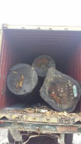 Tvrdo Drvo  Trupci Za Prodaju - Mljevenje,Sitnjenje, Bubinga , Dabema , Kosipo