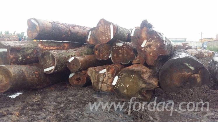 Stämme Für Die Industrie, Faserholz, Bubinga , Dabema , Kosipo