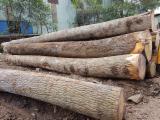 森林及原木 亚洲 - 锯木, 白蜡树