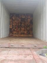 Forest and Logs - 35-69 / 70-100/ 100 + cm Teak Square Logs Spain