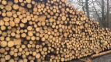 Orman ve Tomruklar - Kerestelik Tomruklar, Selvi Ağacı, Çam - Redwood