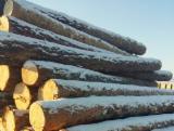 Nadelrundholz Zu Verkaufen - Masten, Sibirische Lärche