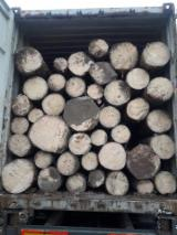Forest and Logs - Industrial Spruce Logs