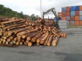 Meko Drvo  Trupci Za Prodaju - Za Rezanje, Bor Elliotis , Bor -