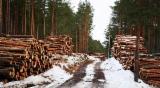 Nadelschnittholz, Besäumtes Holz Zu Verkaufen - Fichte , Kiefer - Föhre