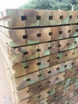 Find best timber supplies on Fordaq - IBP - Pine - Scots Pine Squares, Fresh Sawn.
