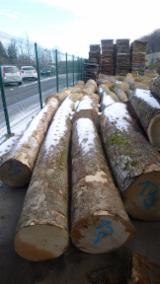 Finden Sie Holzlieferanten auf Fordaq - Montpreis d.o.o. - Schnittholzstämme, Bergahorn, FSC