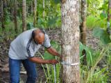 森林及原木 北美洲 - 厄瓜多, 柚木