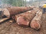 Nadelrundholz Gesuche - Stämme Für Die Industrie, Faserholz