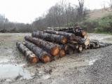 Kłody Twardego Drzewa Na Sprzedaż - Kontaktuj Się Z Firmami - Kłody Okleinowe, Tlipanowiec Amerykański