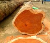 Trouvez tous les produits bois sur Fordaq - AGRO-FEED - Vend Avivés Merbau