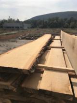 Hardwood  Unedged Timber - Flitches - Boules FSC - Unedged Dried Lumber Oak.