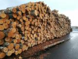Looking for Fresh Cut Birch Veneer Logs