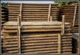 Find best timber supplies on Fordaq - IBP - Looking for Rounded Pine Stakes with Autoclave Impregnation