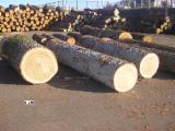 木皮单板原木, 橡木