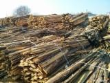 Дрова - Лісові Відходи - Сосна Звичайна Використовувана Деревина Польща