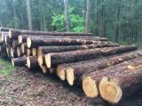 Kłody Tartaczne, Sosna Zwyczajna - Redwood, Świerk - Whitewood