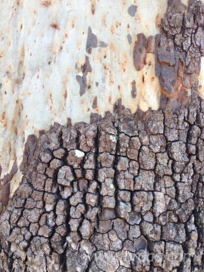 Vend-Grumes-De-Sciage-Queensland