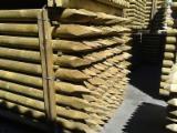 Pine Stakes FSC