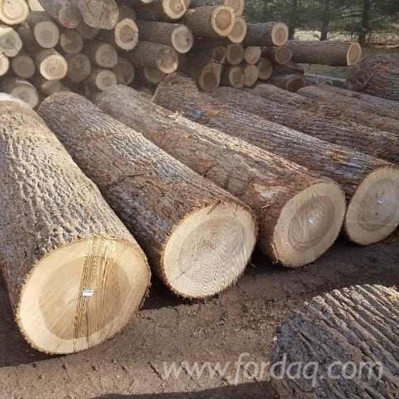 Yellow Poplar, Tulipwood veneer logs