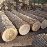 Forest And Logs North America - Yellow Poplar, Tulipwood veneer logs