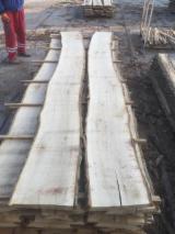 Find best timber supplies on Fordaq - TIMBEX (Timbex Iberica, S.L.) - Turkey Oak (Quercus cerris), Sizes on Request, Turkish Oak