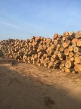 Turkey Oak (Quercus cerris) Logs