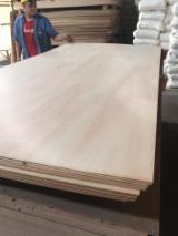 Eucalyptus Plywood A/C Grade with MUF Resin