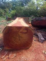 Find best timber supplies on Fordaq - Maderas Tropicales - 70-200 cm Doussie Peeling Logs Spain