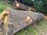 Veneer Logs, Red Oak, Walnut