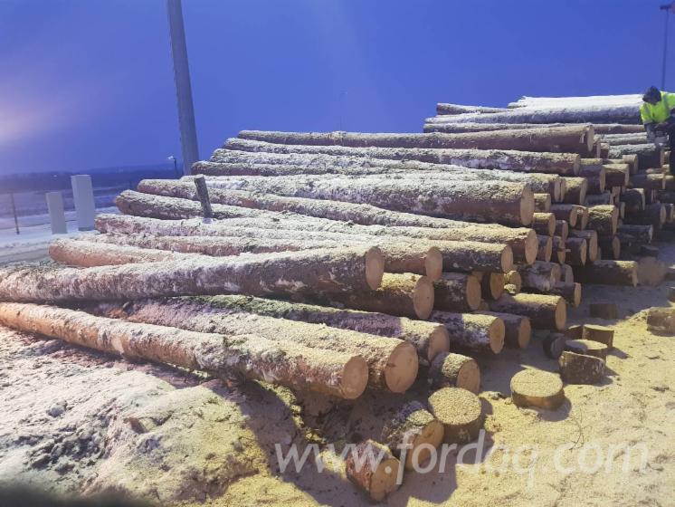 Vend-Grumes-De-Sciage-Pin---Bois-Rouge--Epic%C3%A9a---Bois-Blancs-Lithuania