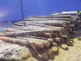 Wood Logs For Sale - Find On Fordaq Best Timber Logs - Scots Pine and Spruce 12-19cm / 20+ ave 26cm ABC Saw Logs from Lithuania / Poland