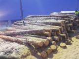 Trouvez tous les produits bois sur Fordaq - DIVERUS, UAB - Vend Grumes De Sciage Pin - Bois Rouge, Epicéa - Bois Blancs Lithuania, Poland
