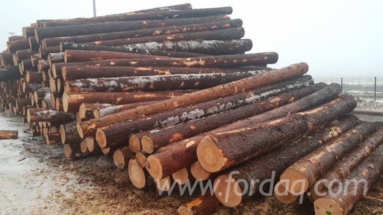 Schnittholzstämme, Kiefer - Föhre, Fichte