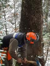 Forest Services - Felling from France