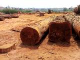 Find best timber supplies on Fordaq - COURTEX-MADERAS TROPICALES S.L. - 80 + cm Okan Saw Logs Spain