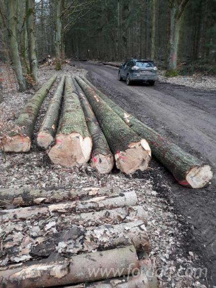 Wholesale Grand Fir 25-57 cm BC - Sägeholz Saw Logs from Germany, Mecklenburg-Vorpommern