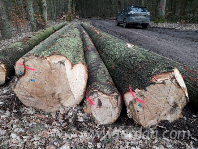 Softwood Logs