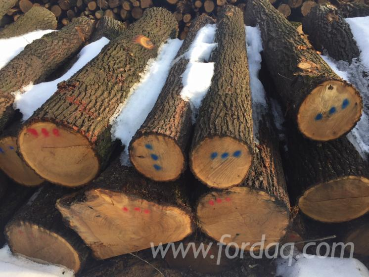 Oak saw logs