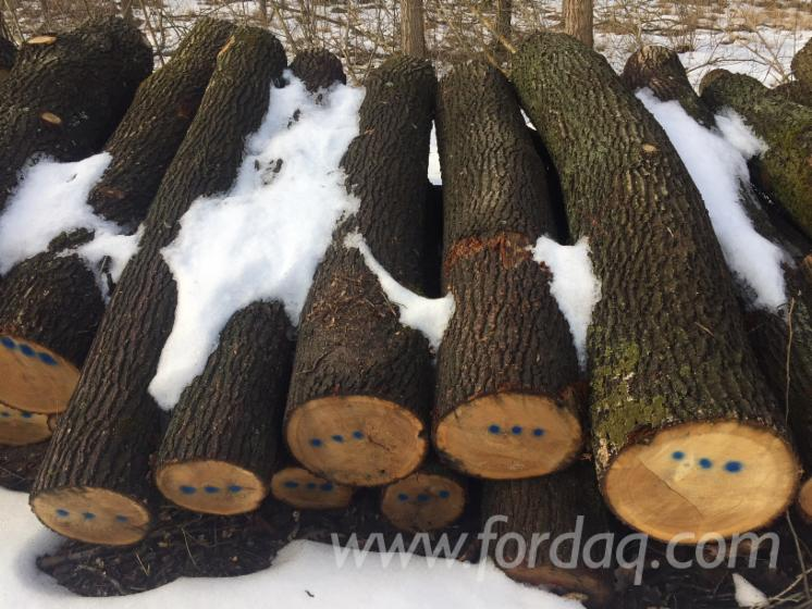 Vend Grumes De Sciage Chêne Hongrie