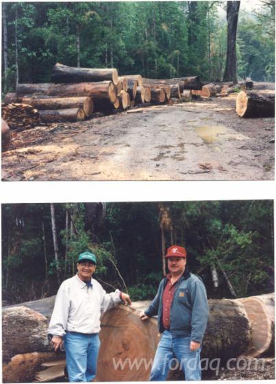 616-Acres-of-Chilean-Hardwood