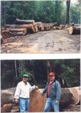 Veja Florestas A Venda Em Todo O Mundo. Compre Diretamente Dos Proprietários Florestais - Vender Bosques Coigue Chile El Rancho Province