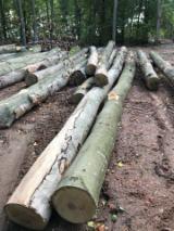 Hardhoutstammen Te Koop - Registreer En Contacteer Bedrijven - Zaagstammen, Beuken