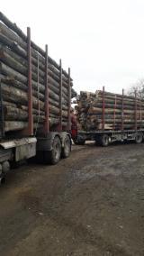 薪材、木质颗粒及木废料 - 劈切薪材 – 未劈切 未开裂的薪材/未开裂原木 鹅耳枥, 榉木, 橡木
