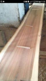 Find best timber supplies on Fordaq - 30+ cm Walnut Saw Logs
