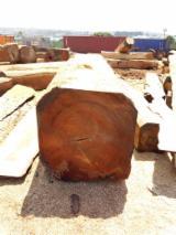 Laubholzstämme Zu Verkaufen - Jetzt Anbieter Kontaktieren - Schnittholzstämme, Doussie